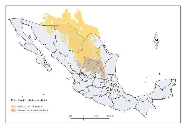 Candelilla plant distribution map in Mexico.