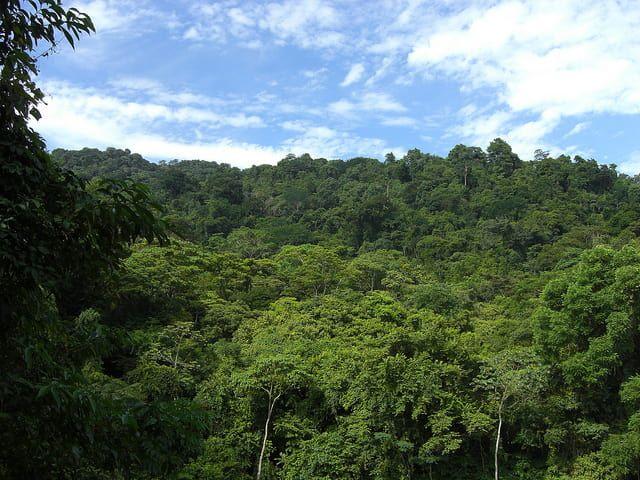 Jungle in Chiapas
