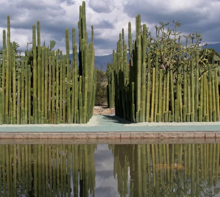 The Ethnobotanical Garden,